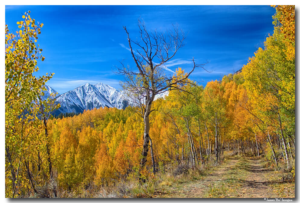 Colorado Fall Foliage Back Country View