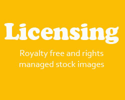 aspen forest Licensing Royalty free and rights managed stock images