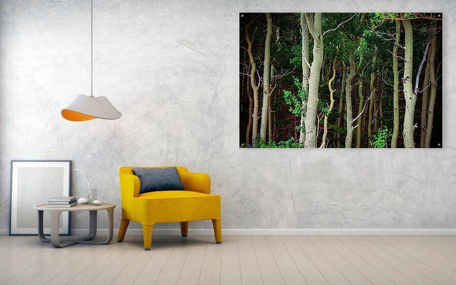 Forest Wilderness Acrylic Wall Art Print